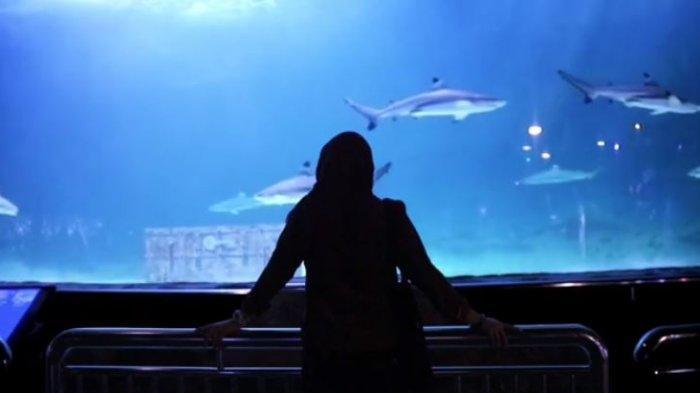6 Wahana di Seaworld Ancol yang Seru, Jangan Lupa Berfoto di Under Water Tunnel yang Instagramable