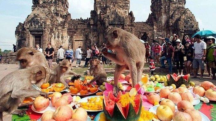 Imbas Virus Corona, Ratusan Monyet Serbu Kota di Thailand