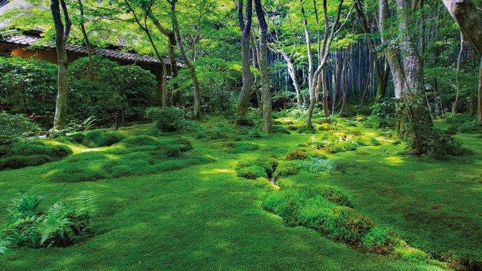 Jadi Harta Nasional, Ini Alasan Orang Jepang Suka dengan Lumut