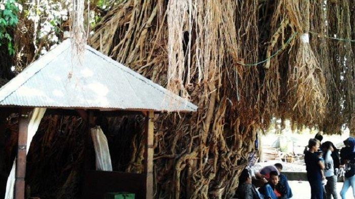 Mengikat Akar Pohon Beringin, Tradisi Unik yang Dilakukan Pengunjung di Makam Loang Baloq