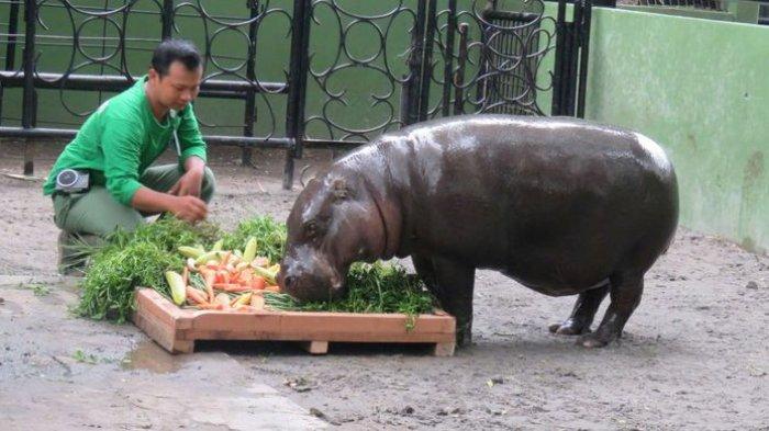 Aturan dan Protokol Kesehatan Bagi Kamu yang Liburan ke Kebun Binatang Surabaya