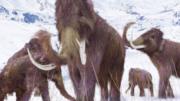 Beberapa ekor mammoth masih hidup, pada masa piramida Mesir sedang dibangun.