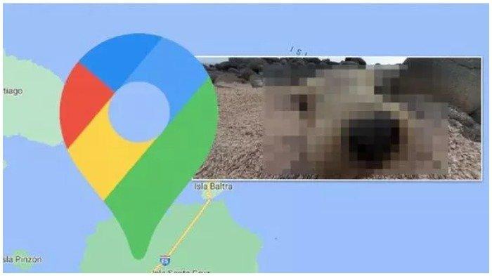 Terekam Google Maps Street View, Singa Laut yang Menghebohkan Wisatawan