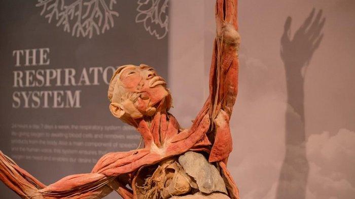 Penyelenggara Pameran Organ Tubuh Dituduh Pajang Mayat Terpidana Mati Tiongkok