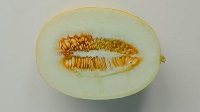 Ilustrasi buah melon