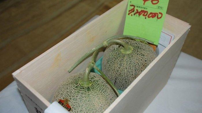 Seorang Wanita Ditangkap Karena Melubangi 13 Melon Termahal di Jepang yang Dijual di Supermarket