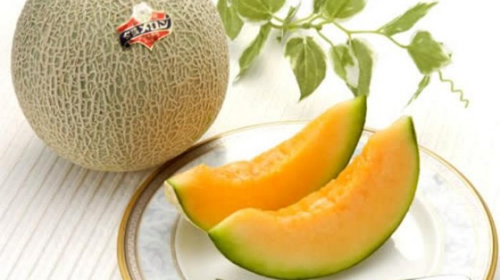 Image result for buah melon