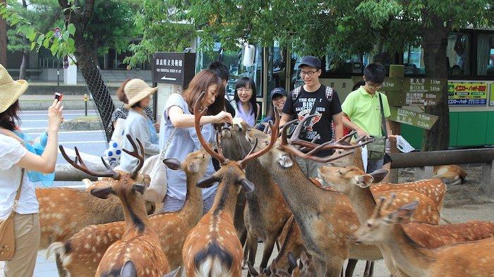 Memberi Makan Rusa di Nara Park, Jepang