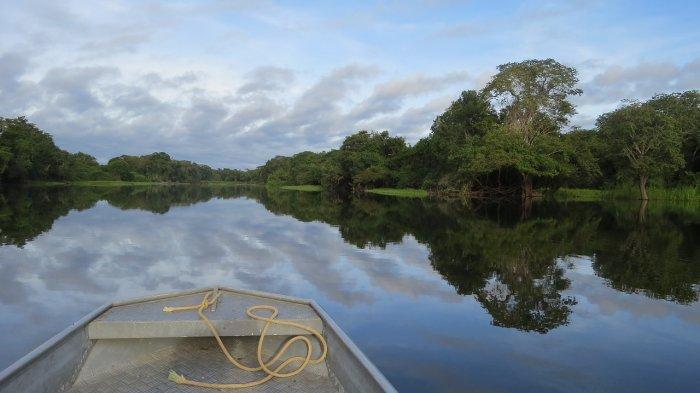 Fakta Unik Black Caiman, Pemangsa Terbesar di Sungai Amazon yang Pandai Berkamuflase