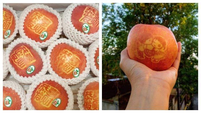 Fakta Unik Mojie Ringo, Teknik Melukis Kulit Apel ala Jepang dengan Bantuan Sinar Matahari