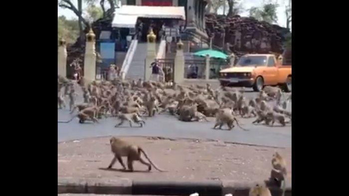 Kunjungan Turis Asing Menurun, Kota di Thailand Ini Diserbu Ratusan Monyet
