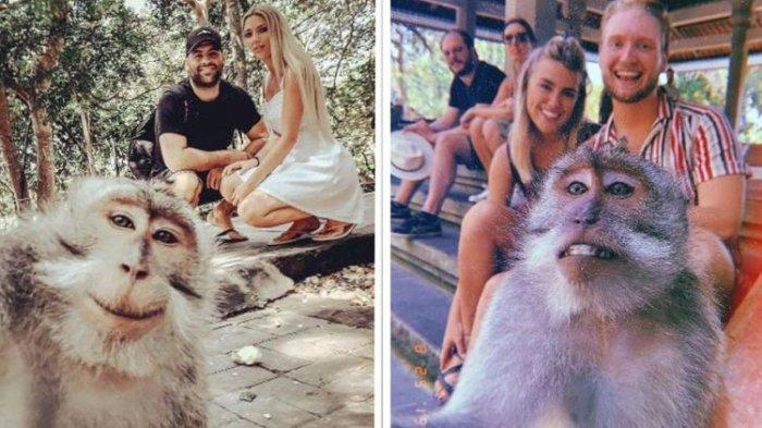 Viral di Twitter, Cara Foto Selfie Bareng Monyet di Monkey Forest Ubud