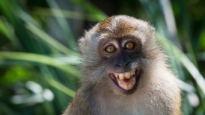 15 Hewan Paling Narsis Yang Kerap Tebar Senyum Depan Kamera Gaya