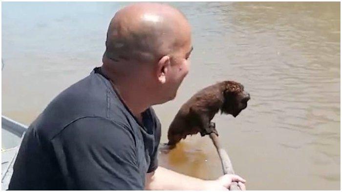 Momen Mengharukan Nelayan Selamatkan Monyet Langka yang Nyaris Tenggelam