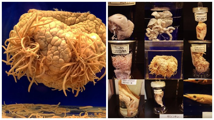 Melihat Museum Parasitologi Megure di Tokyo yang Bisa Membuat Kamu Bergidik