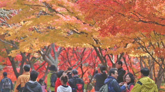 Panduan Lengkap Cara Mudah dan Cepat Buat Visa Korea Selatan 2019
