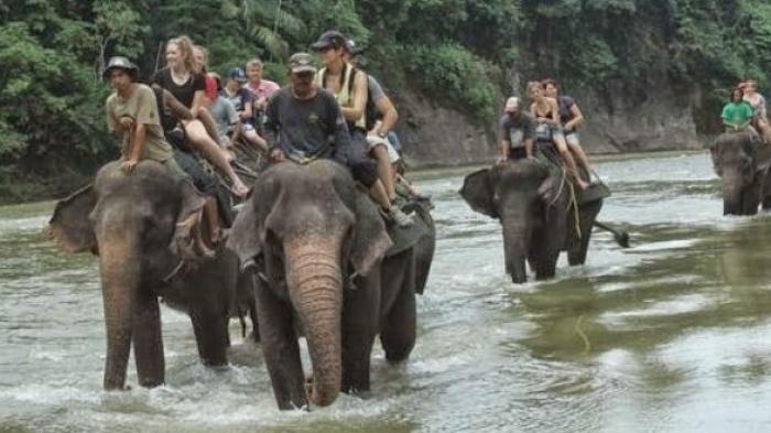 Wisatawan menunggang gajah di Tangkahan