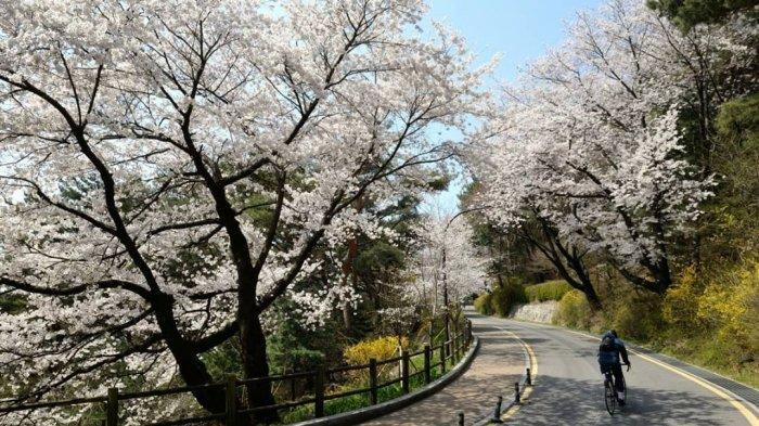 5 Tempat Wisata Gratis di Korea Selatan, Namsan Park Tawarkan Spot Instagramable