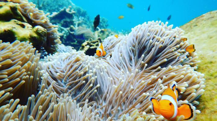 Melihat Pesona Pulau Pahawang, Surga Bahari di Lampung yang Disebut Mirip Maldives