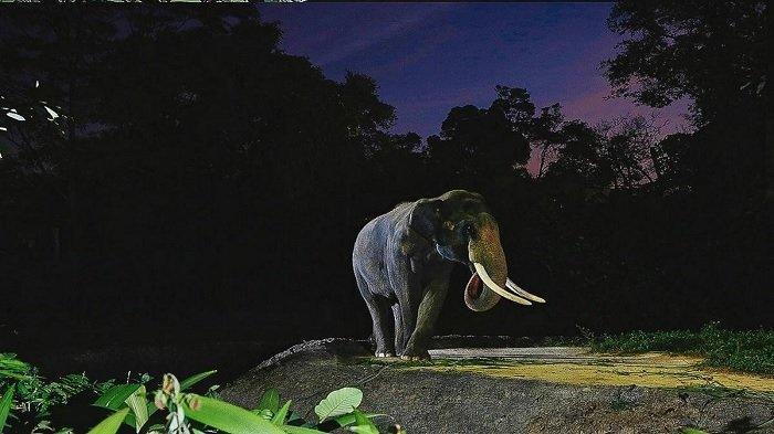 10 Tempat Wisata di Singapura Buat Animal Lovers, Harus Coba Serunya Night Safari