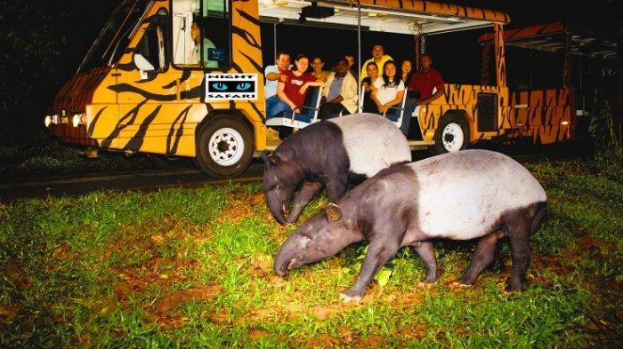 Night Safari Singapore, Kebun Binatang Pertama di Dunia untuk Binatang Malam