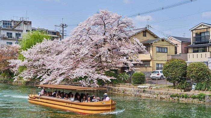 Prakiraan Jadwal Mekar Bunga Sakura di Berbagai Kota, Jadi Referensi untuk Liburan ke Jepang