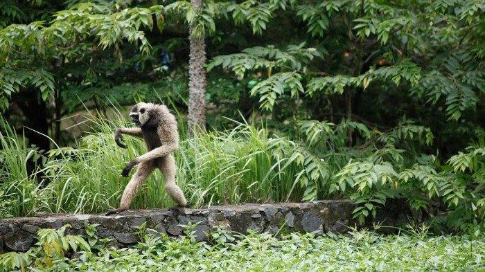Sudah Dibuka Kembali 15 Juli 2020, Semarang Zoo Tambah 2 Koleksi Satwa Baru