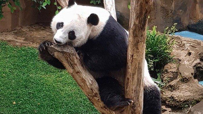 Taman Safari Bogor Bagi-bagi Voucher F&B Rp 20.000, Begini Cara Mendapatkannya