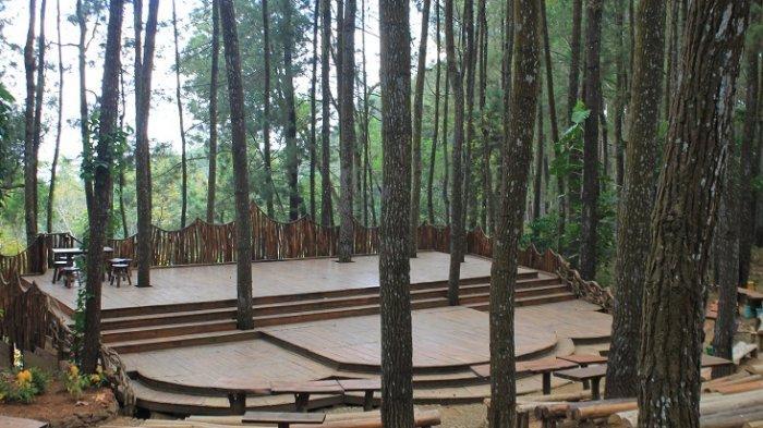4 Tips Berfoto Di Panggung Sekolah Hutan Pinus Mangunan Yang Instagramable Tribun Travel