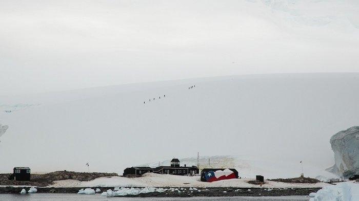 Antartika Catat Kasus Covid-19 Pertama, Jadi Benua Terakhir di Bumi yang Terinfeksi
