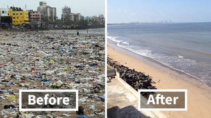 Misi Pembersihan Pantai Besar-besaran Sukses, Penyu-penyu Kembali Terlihat di Pantai India