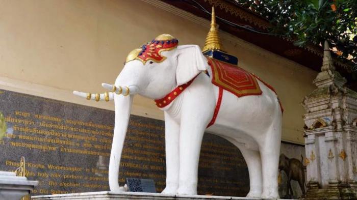 Thailand Punya Julukan Negeri Gajah Putih, Ternyata Ini Alasannya