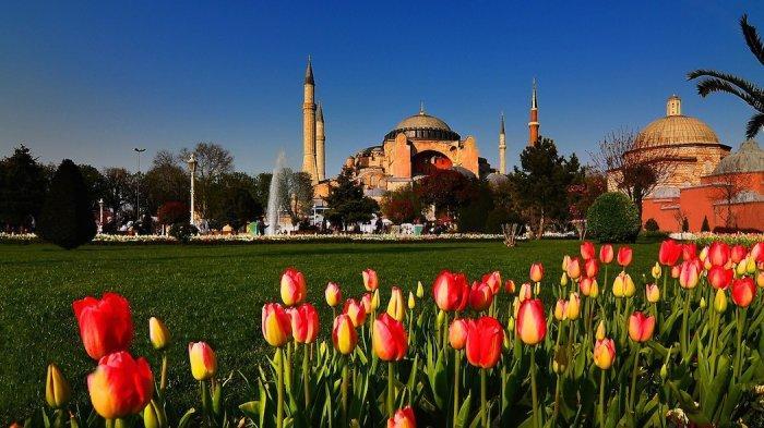 4 Fakta Unik Bunga Tulip, Ikon Wisata Belanda yang Berasal dari Turki