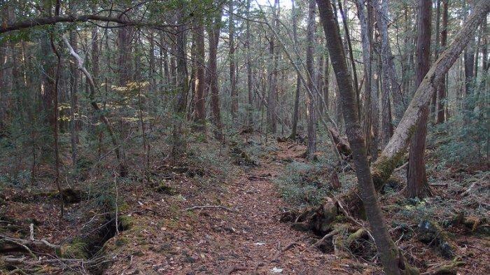 Pemandangan di Hutan Aokigahara
