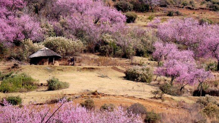 Pemandangan di Lesotho