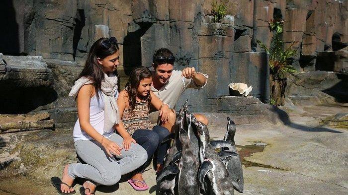 Pengunjung berinteraksi dengan penguin di Taman Safari Prigen.