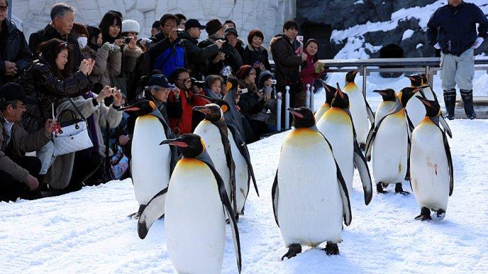 5 Kebun Binatang Terbaik di Jepang, Alternatif Spot Wisata Saat Liburan ke Negeri Sakura