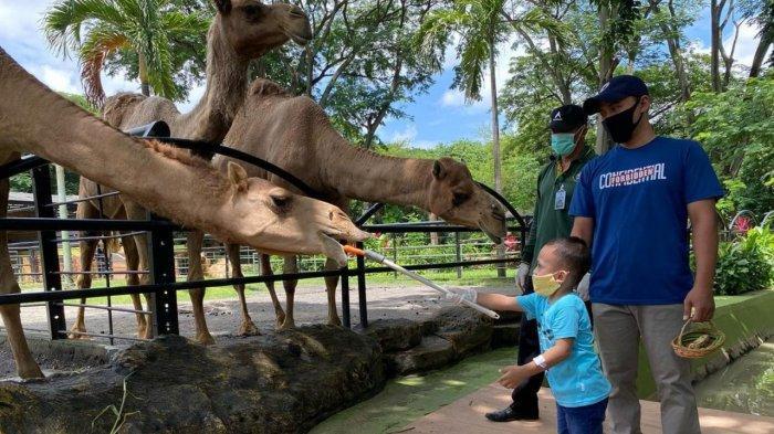 Pengunjung anak yang memberi makan unta di Kebun Binatang Surabaya