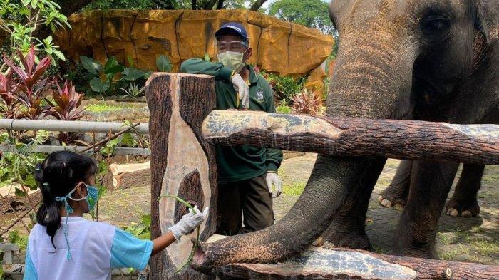 Pengunjung anak yang sedang memberi makan gajah di Kebun Binatang Surabaya