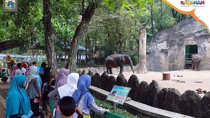 Tips Liburan ke Taman Margasatwa Ragunan, Simak Waktu Terbaik untuk Berkunjung