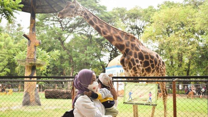 Harga Tiket Masuk Kebun Binatang Surabaya Terbaru 2021, Anak Usia Bawah 12 Tahun Boleh Masuk