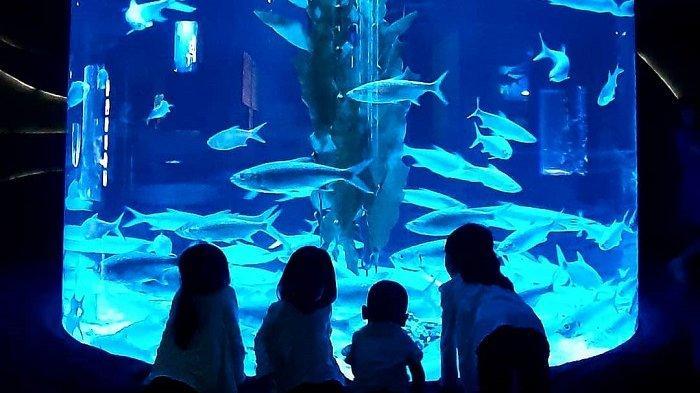 Harga Tiket Masuk Jakarta Aquarium Neo Soho, Tempat Wisata di Jakarta untuk Liburan Akhir Pekan