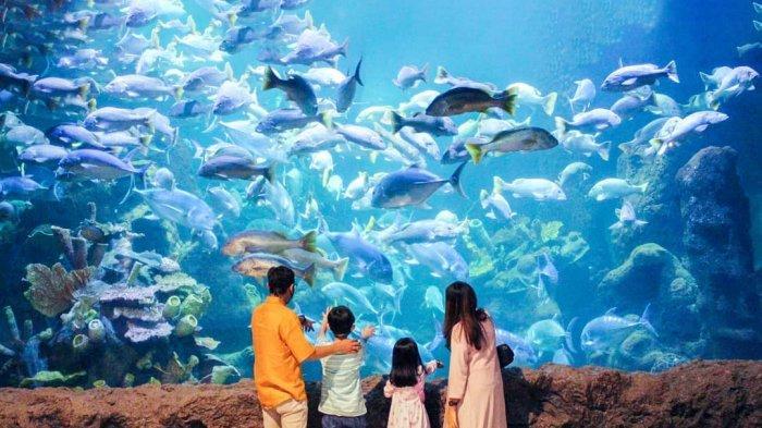 Terbaru, Harga Tiket Masuk Seaworld Ancol per Desember 2020