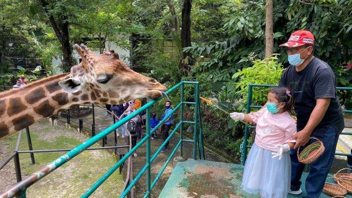 Harga Tiket Masuk Kebun Binatang Surabaya Selama Libur Lebaran 2021
