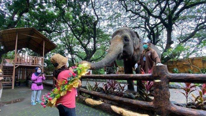 Pengunjung yang sedang memberi makan gajah di Kebun Binatang Surabaya