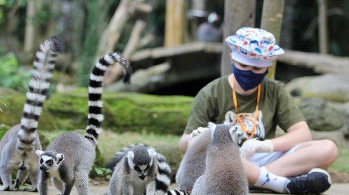 Daftar Promo Tiket Masuk dan Atraksi di Bali Zoo 2021, Cobain Sensasi Memandikan Gajah Sumatra