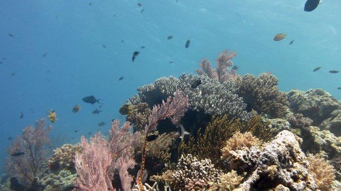5 Spot Menyelam Terbaik di Indonesia, Jelajahi Keragaman Biota Laut di Perairan Pulau Menjangan