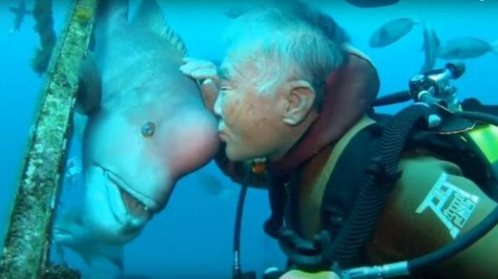 VIDEO: Keren! Peselam Ini Bersahabat Puluhan Tahun dengan Ikan, Cara Manggilnya Lucu