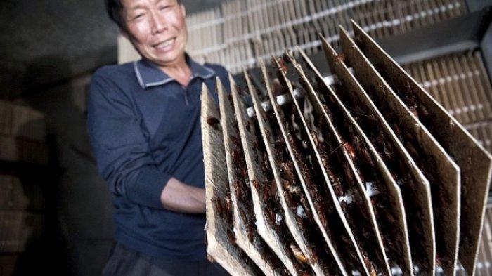 Fakta China - Rajanya KW Sampai Pernikahan Hantu, Ini 10 Hal Konyol Cuma Ada di Negeri Tirai Bambu