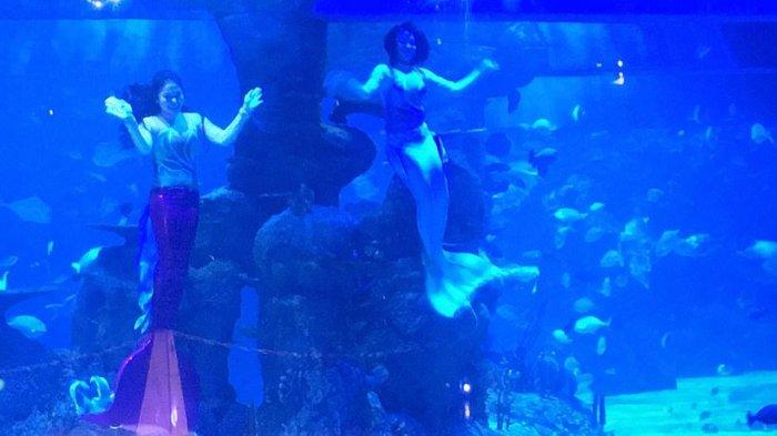 Liburan Akhir Pekan di Jakarta, Intip Jadwal Main Pertunjukan Putri Duyung di Jakarta Aquarium